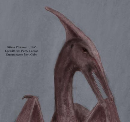 pterosaur sketch by eyewitness Patty Carson
